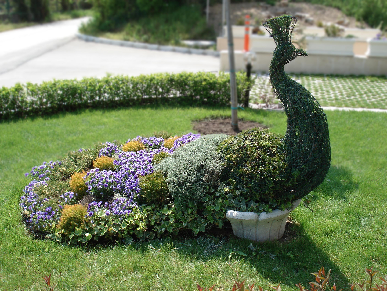 Топиарий в саду своими руками мастер